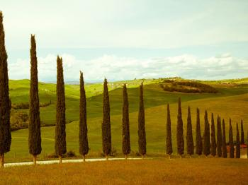 The iconic trees of Tuscany